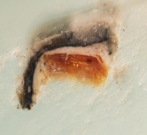 magnified image of a cross section of an embedded paint sample